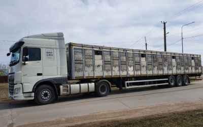 Перевозка животных и скота 8-965-920-08-80 - Кызыл, цены, предложения специалистов